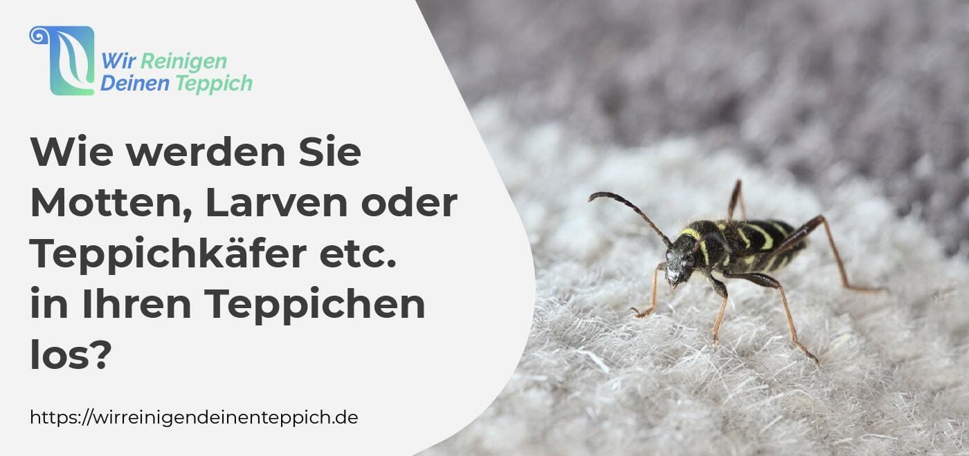 loswerden insekten, motten, larven oder teppichkäfer