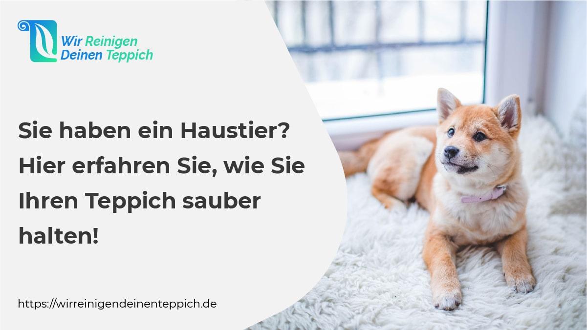 Halten-Sie-Ihren-Teppich sauber-wenn-Sie-Haustiere haben