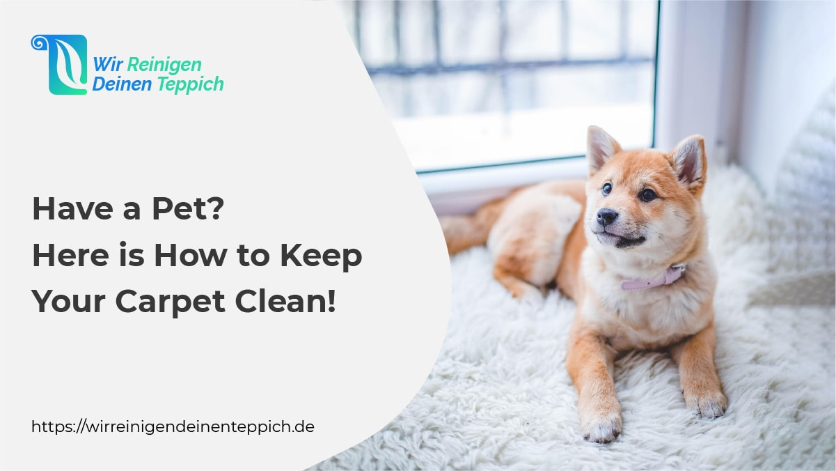 Keep-your-carpet-clean-when-you have-pets